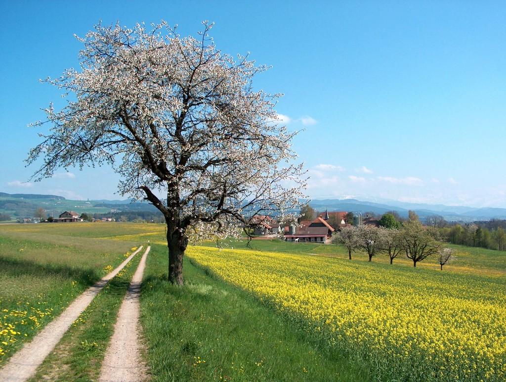 Frühlingslandschft_Aaretal_Schweiz